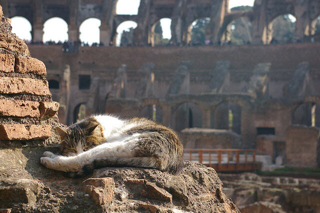 5-cat-sleeping-rome